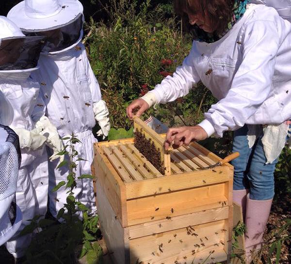 Bijen | Vlinders