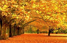 herfst | Tiliander